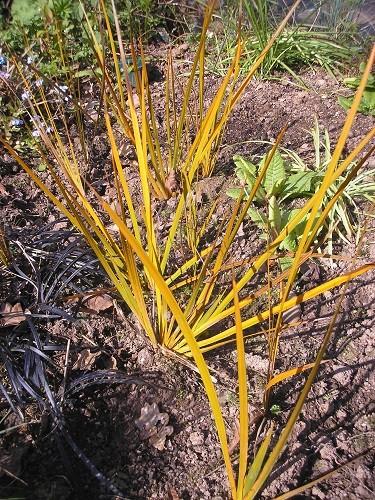 Orange grass?