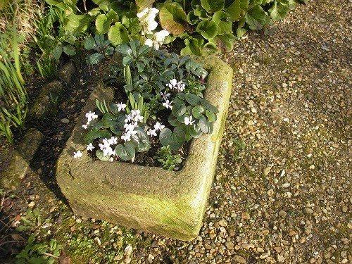 Planting trough at the entrance to the garden