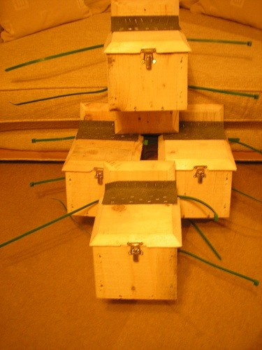 Dormice boxes