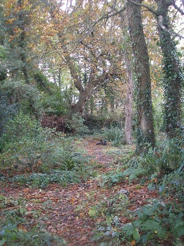 The woodland is looking autumnal with the Chestnut tree leaves which have come down.