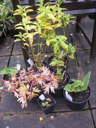 Kevock Plants