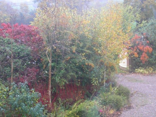From the landing window, with the red stems of the Cornus picking up the colour of next doors Acer.
