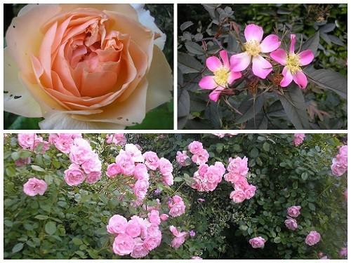 A few roses.