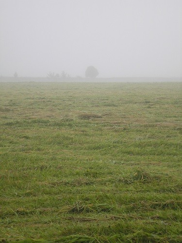 Culloden Moor in the fog.