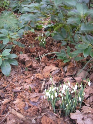 Tucked under rhododendrons.