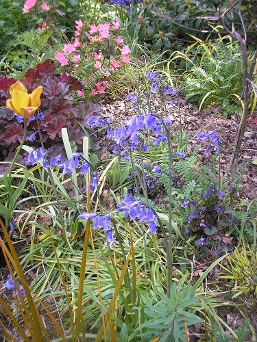 Some English bluebells have seeded here, I'll have to keep an eye on them to make sure they don't spread too far.