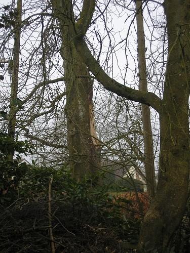 Oak tree minus split.