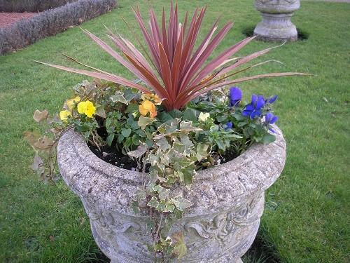 Winter Flowering urns