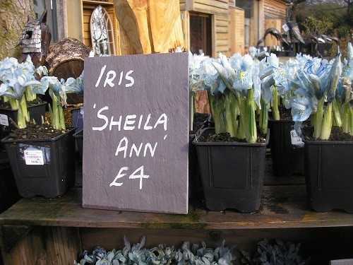 Yes, a pot of Sheila Ann had to come home with me to remind me of a wonderful garden.