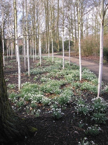 There were thousands of snowdrops as far as the eye could see.