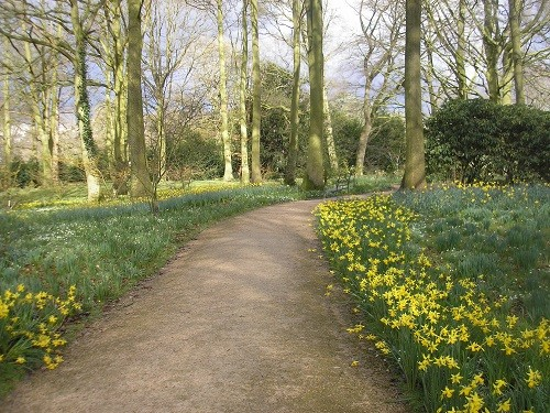 A last look at the thousands of narcissus before we leave.