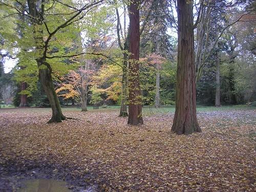 Original trees