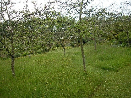 Orchard at Wildside