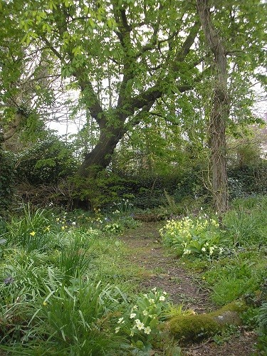 The woodland is also wearing a cloak of green which will increase as the days go by.