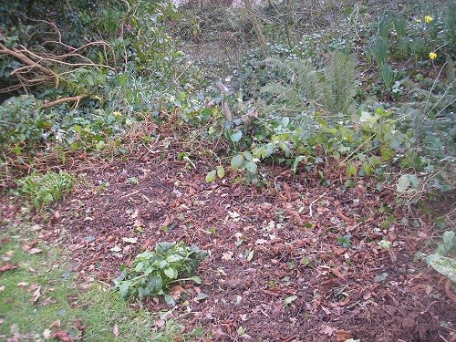 Still the stumps of the cotoneaster to dig out.