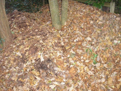In the woodland, leaf mould piles