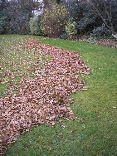 Sweeping leaves